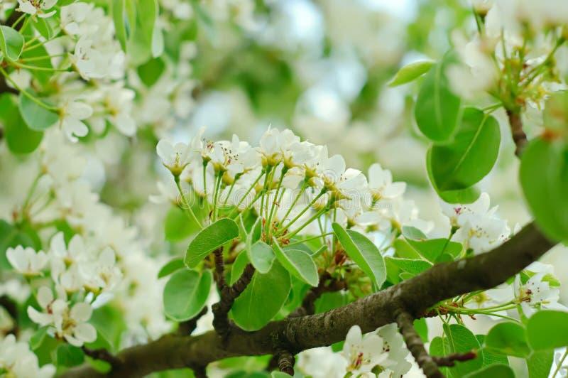 Download Bonkrety Drzewo Fotografia Stock - Obraz: 23777542