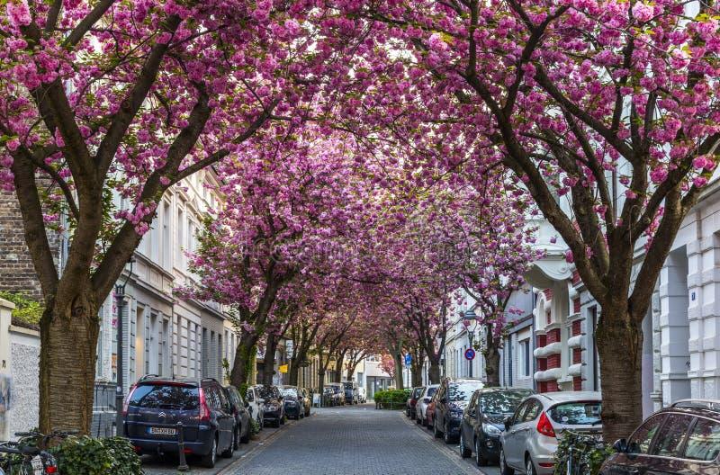 BONN TYSKLAND - APRIL 21, 2018: Breitestrasse eller Cherry Blossom Avenue fotografering för bildbyråer