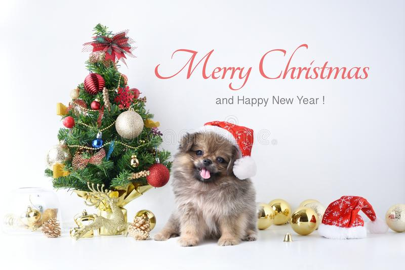 Bonne année, Noël, chien en chapeau de Santa Claus, boules de célébration et toute autre décoration photographie stock