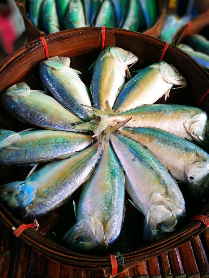 bonne qualité de poissons thaïlandais photos stock