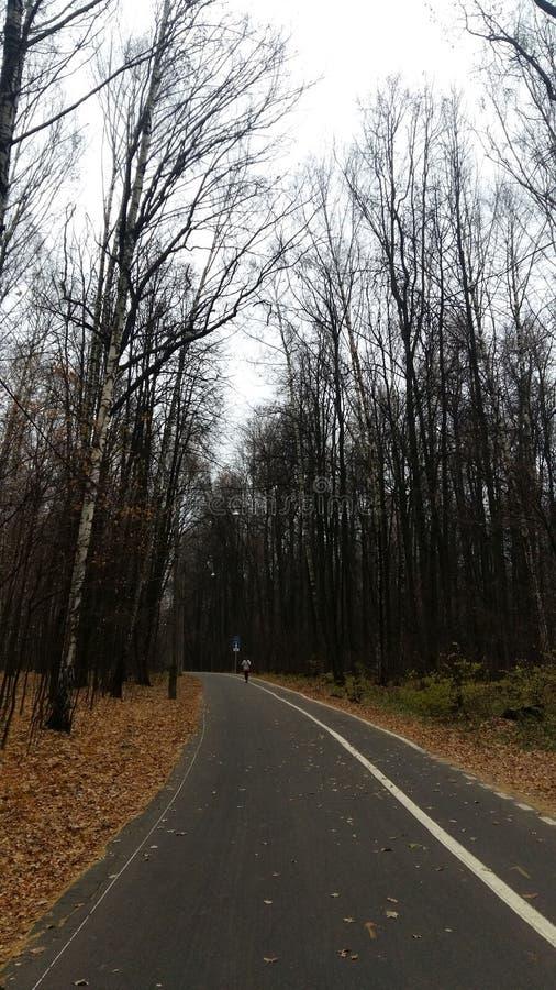 Bonne route en parc d'automne images stock