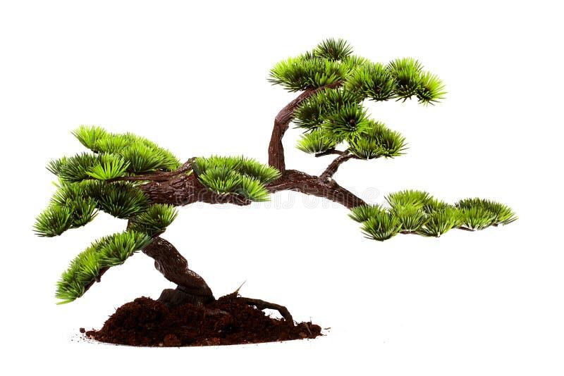 Download Bonsai Royalty Free Stock Images - Image: 12527989