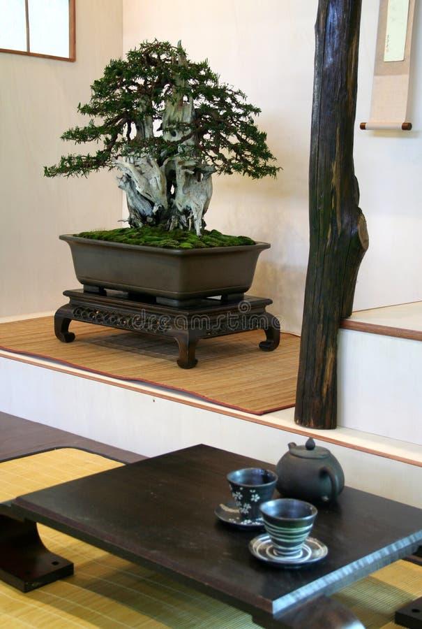 Free Bonsai Royalty Free Stock Images - 13370829