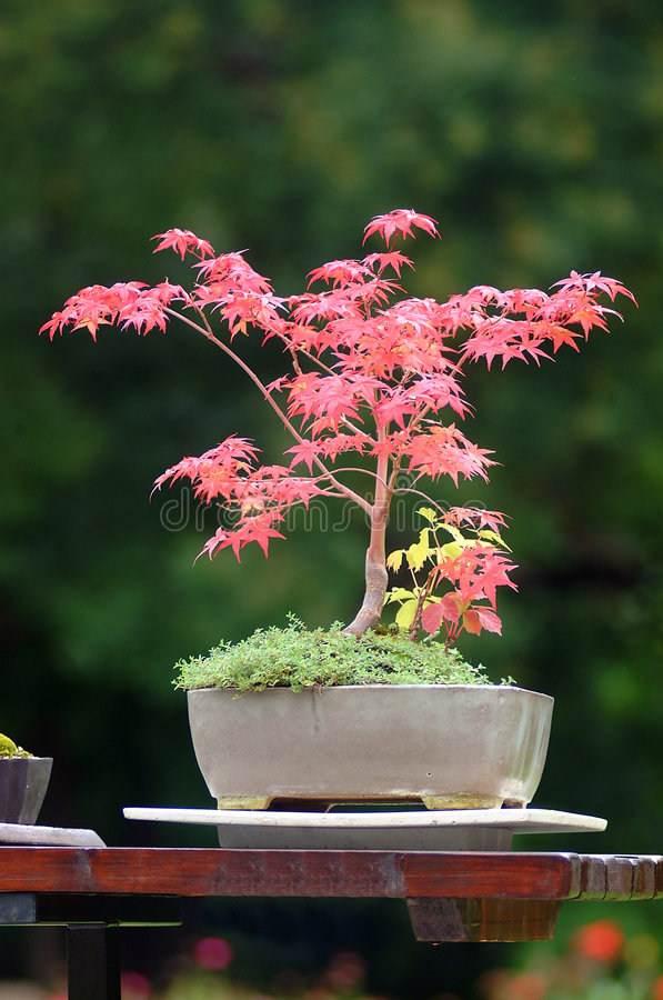Download Bonsai stock image. Image of works, traditional, trees - 1377811