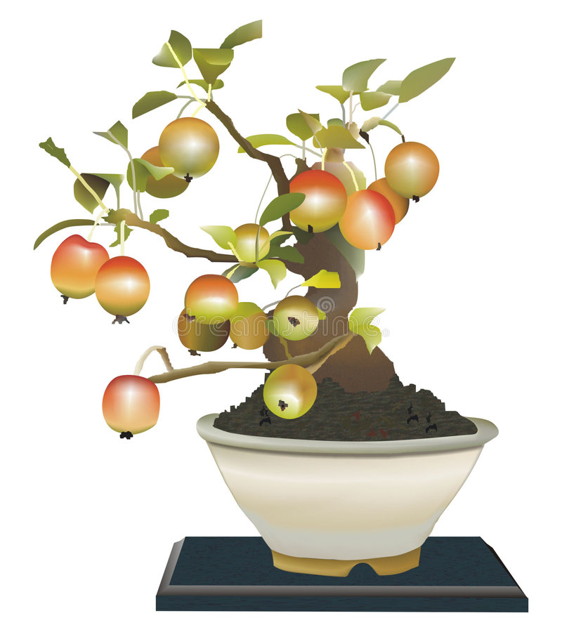 Download Bonsai stock illustration. Image of grower, branch, color - 504877