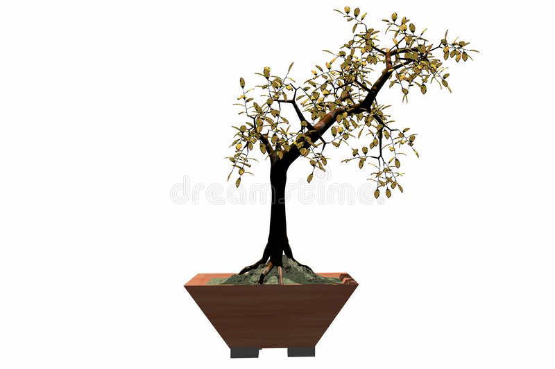 Download Bonsai stock illustration. Image of japan, tree, color - 761486