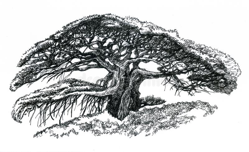 Bonsai Banyan vector illustratie
