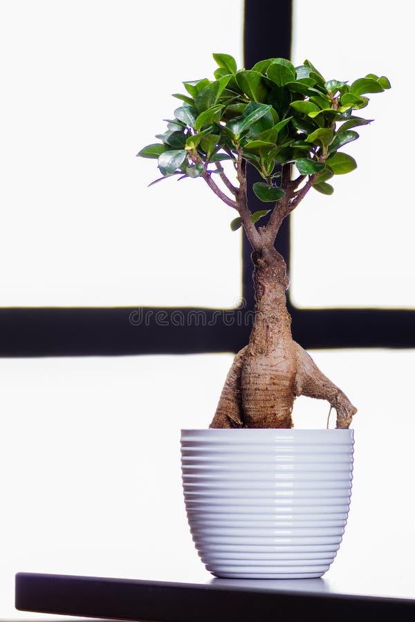 Bonsai-Baum auf einem Bürotisch lizenzfreie stockfotografie
