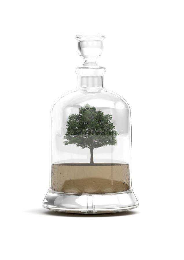 bonsai butelki szkła drzewo obrazy stock