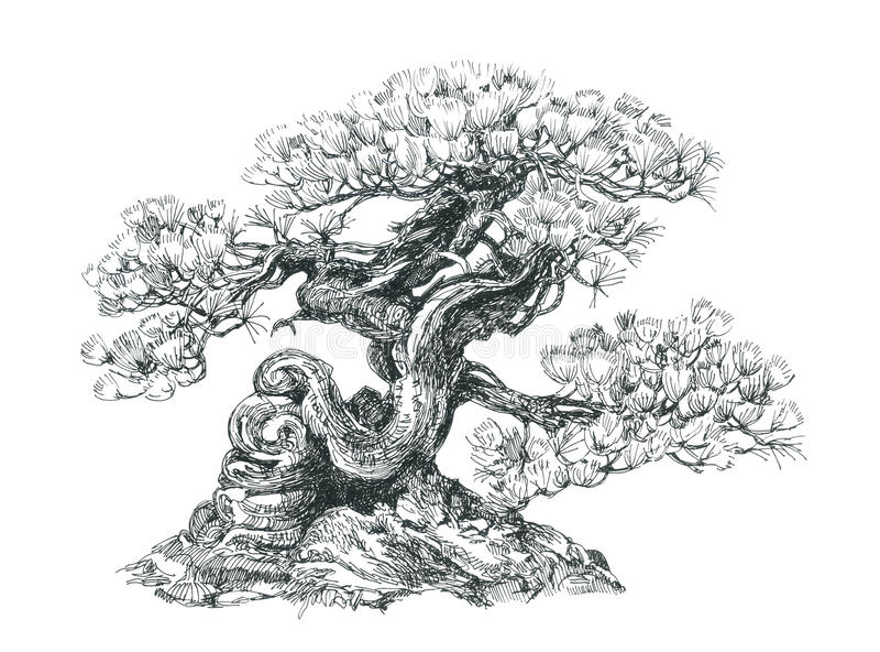 Bonsai coniferous black and white stock illustration - Dessin bonzai ...