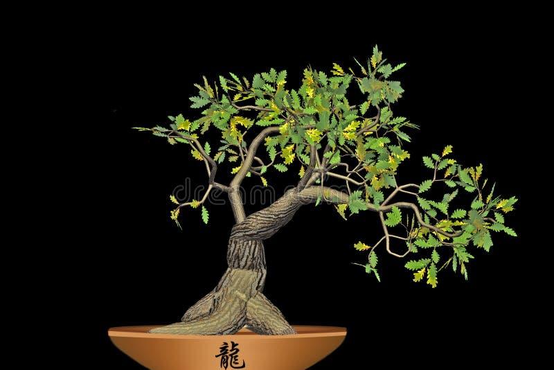 Bonsai Op Zwarte Achtergrond Wordt Geïsoleerd Die. Stock Foto