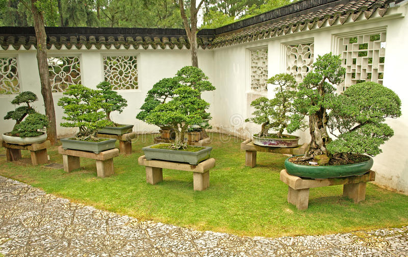 Download Bonsai On Display Stock Photography - Image: 23868952