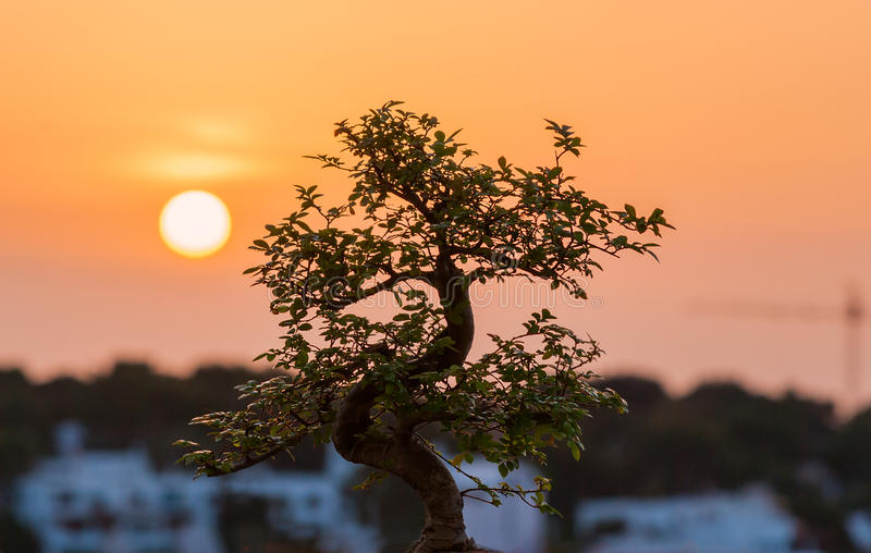 Bonsai en zonsondergang royalty-vrije stock foto