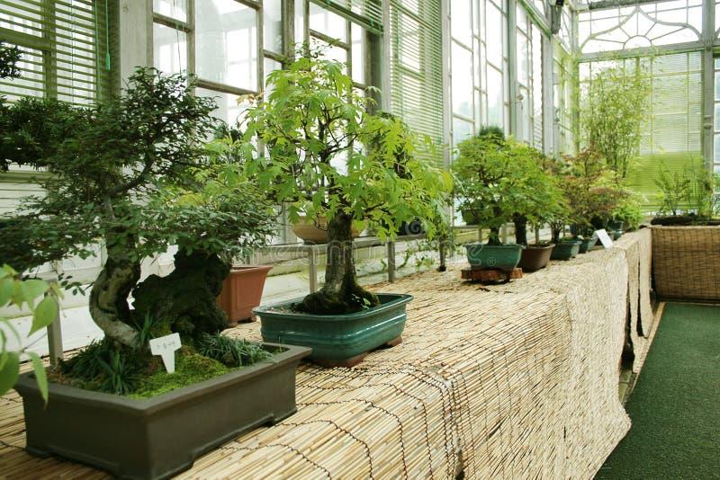 Download Bonsai exhibit stock photo. Image of canada, miniature - 3168624
