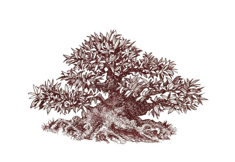 Bonsai, Gęsty obfitolistny mini - drzewo royalty ilustracja