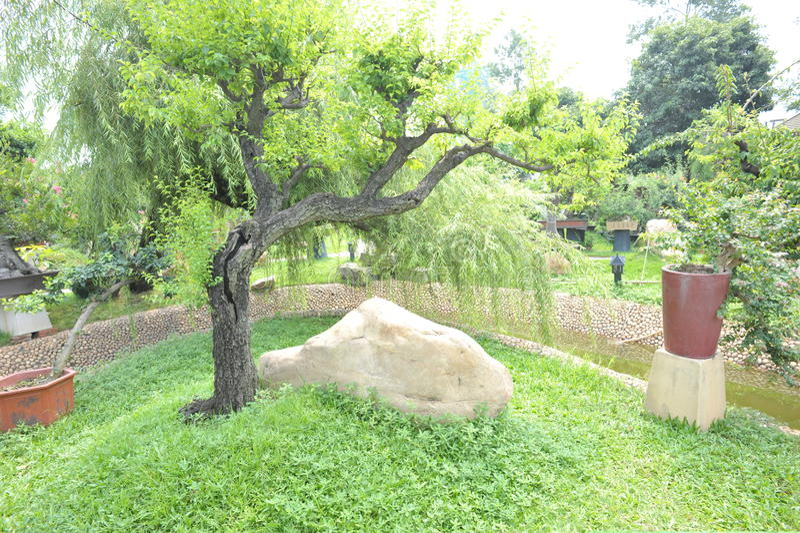Download Bonsai garden stock image. Image of bonsai, footway, grass - 20268207