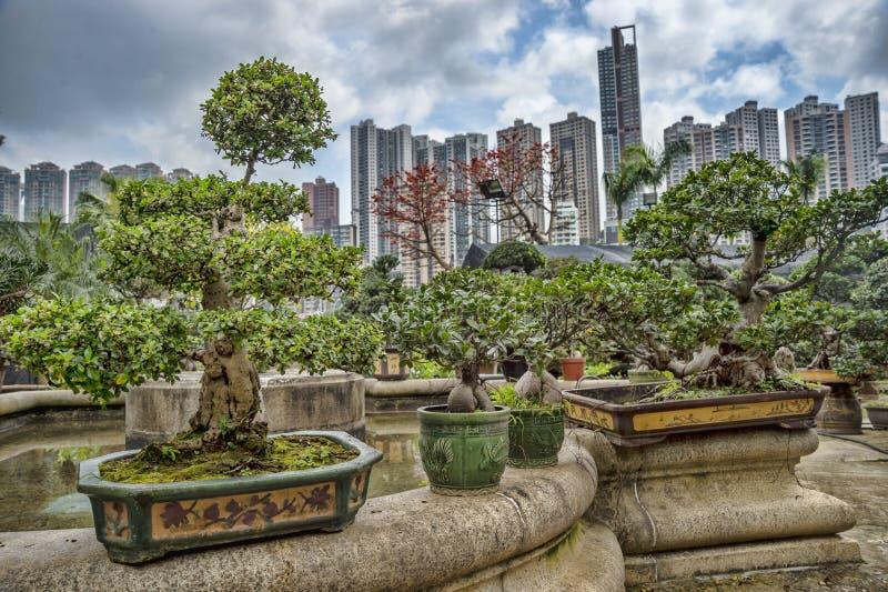 Bonsai in a garden. Collection of bonsai trees in Hong-Kong stock image