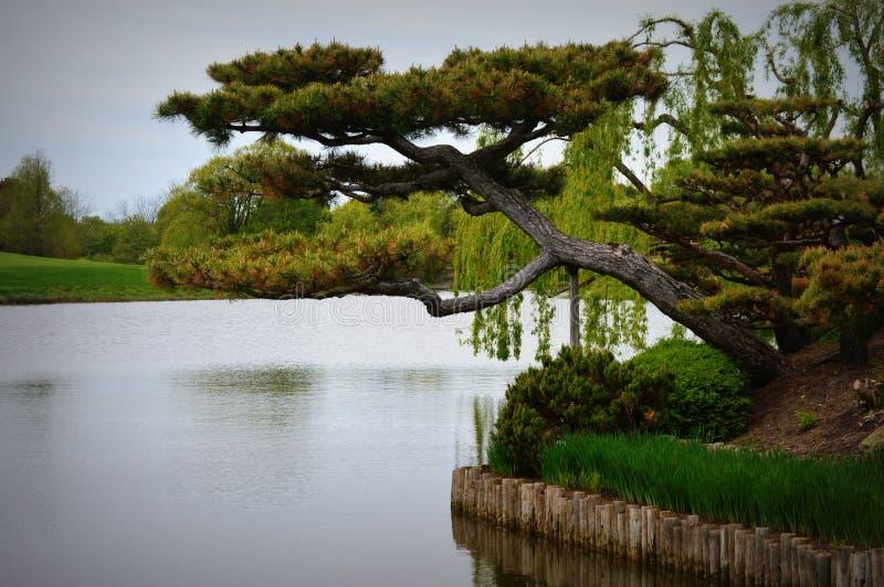 Bonsai giapponesi del giardino fotografia stock