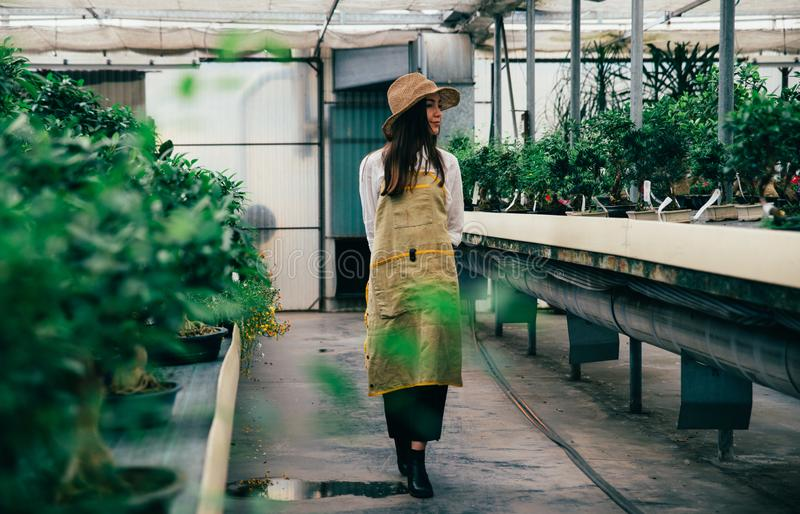 Bonsai greenhouse center. rows with small trees royalty free stock images