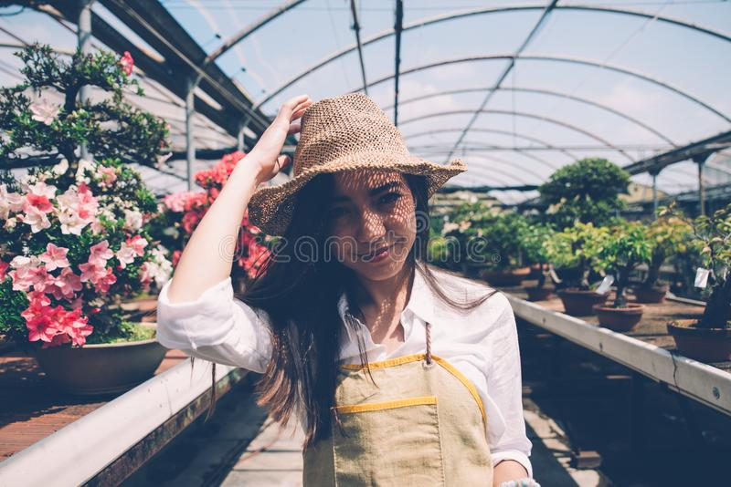 Bonsai greenhouse center. rows with small trees royalty free stock photos
