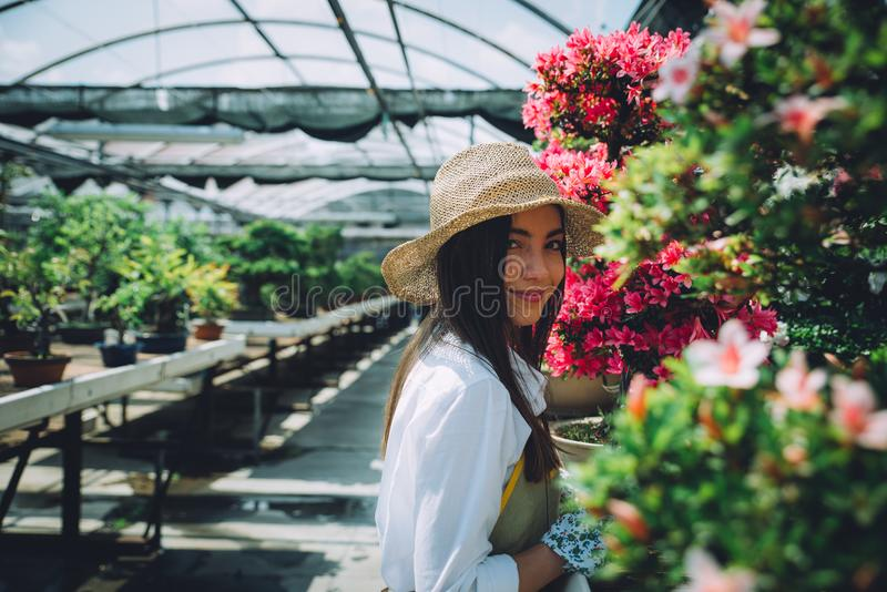 Bonsai greenhouse center. rows with small trees stock photo