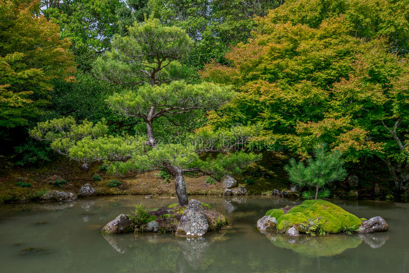 Bonsai look trees in Japanese garden, Hamilton Botanical gardens. New Zealand, North Island royalty free stock image
