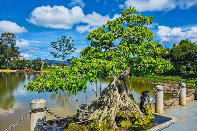 Bonsai nel parco del fiore fotografia stock libera da diritti