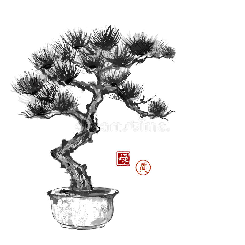 Bonsai pine tree hand hand-drawn with ink stock illustration