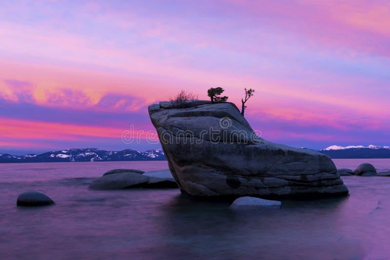 Bonsai Rock royalty free stock photo