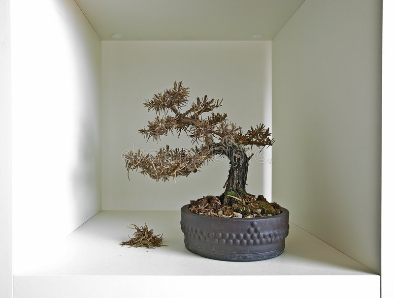 Download Bonsai Shelf III Royalty Free Stock Image - Image: 2842936