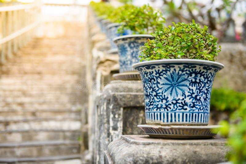 Bonsai,Siamese rough bush in the porcelain pots stock image
