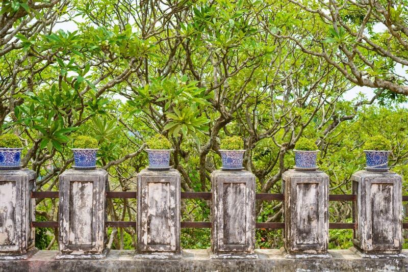 Bonsai,Siamese rough bush in the porcelain pots royalty free stock images