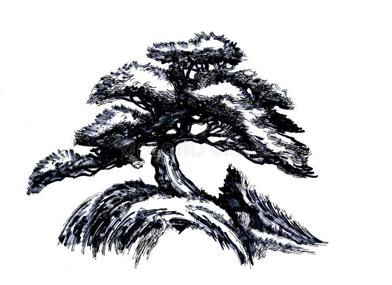 bonsai sosna wiecznozielona miniaturowa Nakreślenie barwiony drewno ilustracja wektor