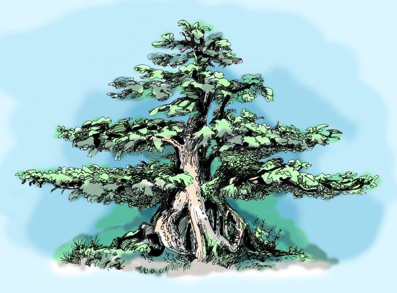 bonsai sosna wiecznozielona miniaturowa Nakreślenie barwiony drewno ilustracji
