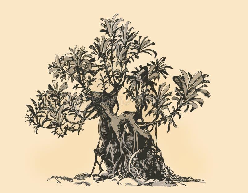 bonsai sosna wiecznozielona miniaturowa Schefflera, rysunkowy atrament ilustracji