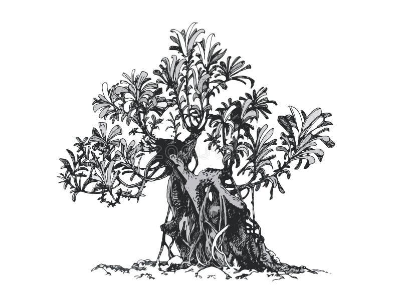 bonsai sosna wiecznozielona miniaturowa Schefflera, rysunkowy atrament royalty ilustracja