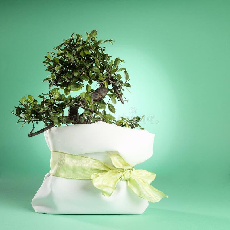 Download Bonsai Tree stock image. Image of root, shaped, like - 26664883