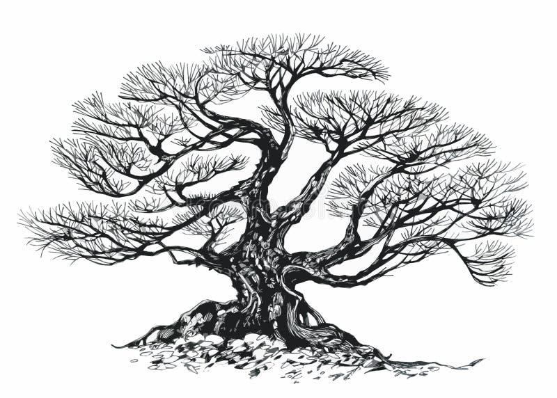 Bonsai Tree Old Tree Drawing Ink Stock Illustration