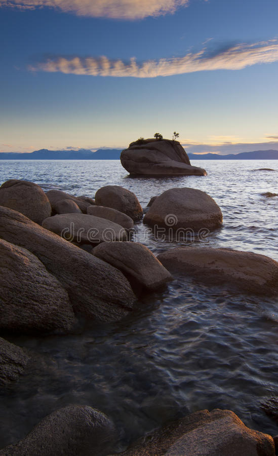 Bonsai Tree Rock stock photography