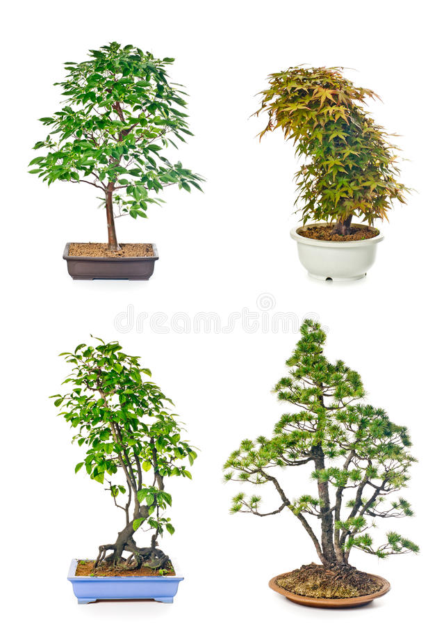 Download Bonsai tree stock image. Image of container, growth, gardening - 42329705