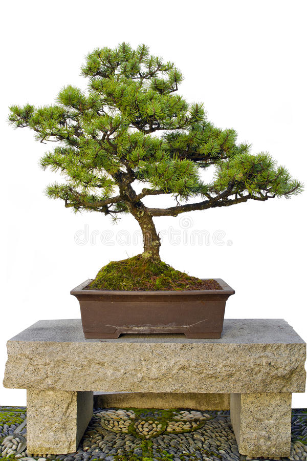 Bonsai Tree On Stone Bench In Chinese Garden Stock Image