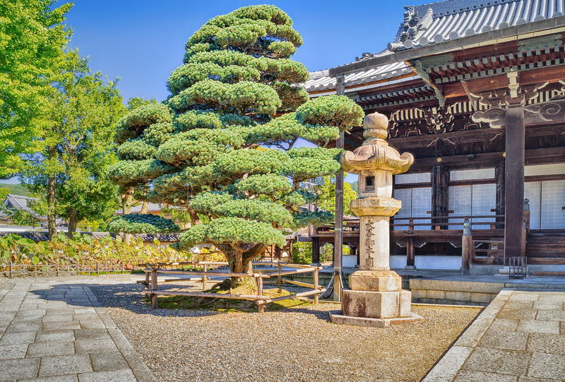 Bonsai tree and traditional japanese building in Otani Hombyo temple royalty free stock photo