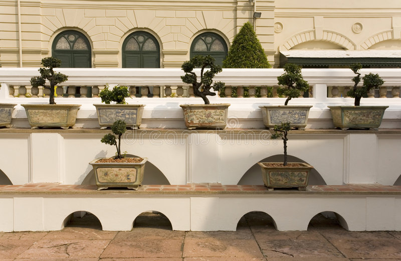 Bonsai trees in planters. On ledges at the Grand Palace in Bangkok, Thailand royalty free stock photo