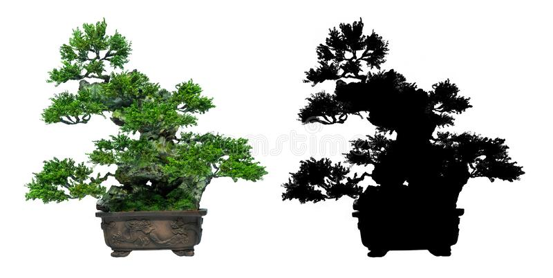 Bonsai trees is on a white background and black silhouette of bonsai. Japanese bonsai trees, on a white background and black silhouette of bonsai. used as a logo stock illustration