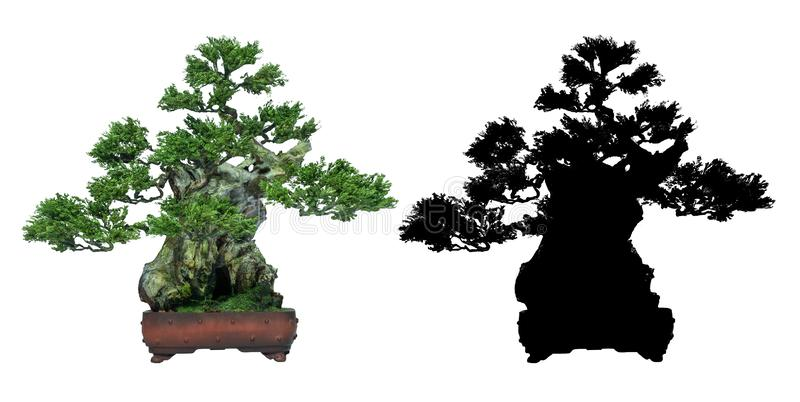 Bonsai trees is on a white background and black silhouette of bonsai. Japanese bonsai trees, on a white background and black silhouette of bonsai. used as a logo royalty free illustration