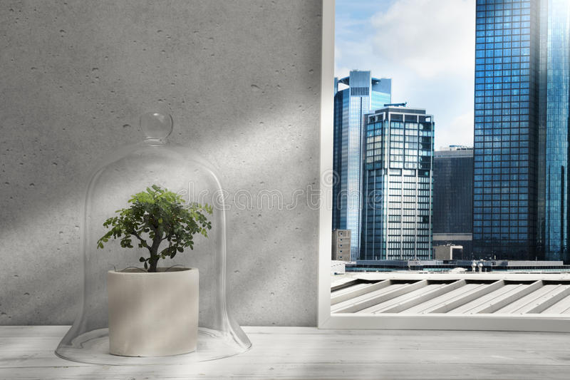 Bonsai under jell jar on window sill, view to skyscrapers royalty free stock images