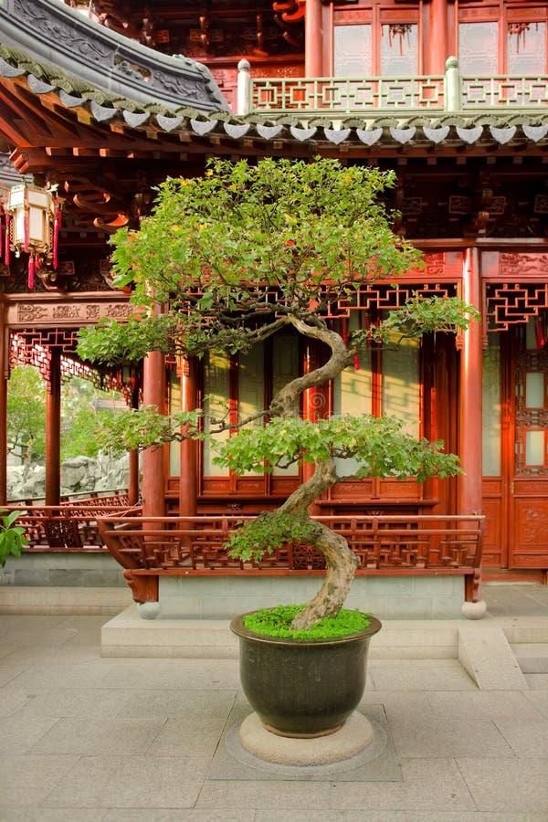 Download Bonsai Uprawia Ogródek Yuyuan Obraz Stock - Obraz złożonej z kultywujący, mały: 13334665