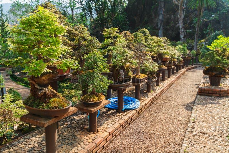 Bonsaibäume lizenzfreie stockfotografie