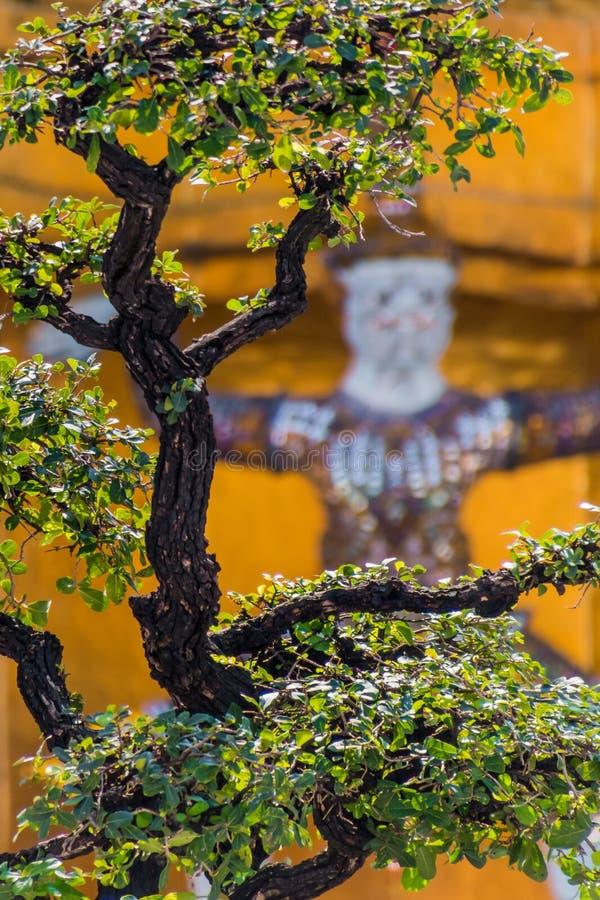 Bonsaibaum vor buddhistischer Schutzstatue in Thailand lizenzfreies stockfoto