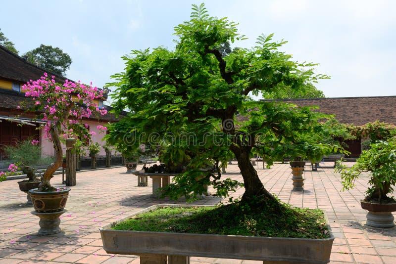 Bonsaibomen in tuin van een klooster, Tint, Vietnam royalty-vrije stock afbeelding